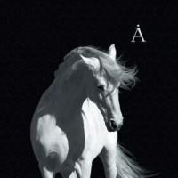 АКВАРИУМ - Лошадь Белая (Винил)